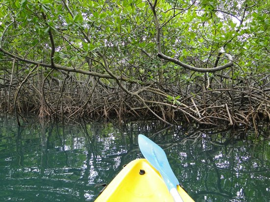 Kayak Nature Evasion