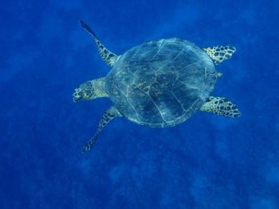 Ras Um Sid : Turtle