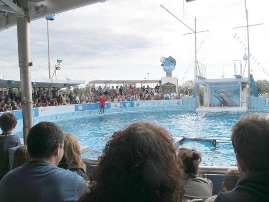 Rimini Dolphinarium : Максимальный трюк