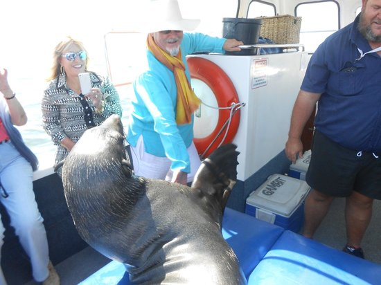 Catamaran Charters: with a wild seal who jumped on board