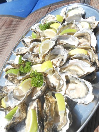 Catamaran Charters: Fresh Oysters at the end of the cruise