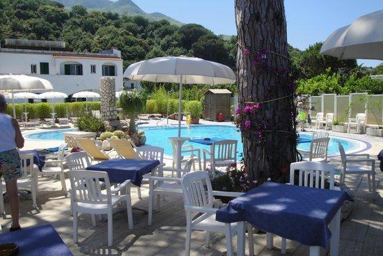 Albergo L'Approdo: a bordo piscina dove si consuma la colazione, all'ombra di  un bellissimo pino marittimo
