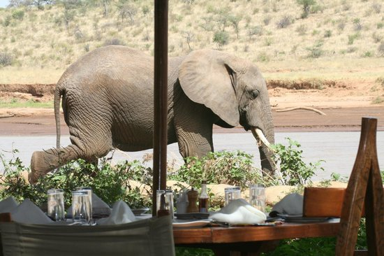 Elephant Comes For Lunch Picture Of Elephant Bedroom Camp Samburu National Reserve Tripadvisor