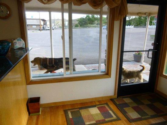 Legacy Inn : Dog friendly as well as people friendly