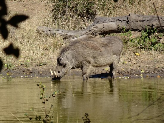 Serondella Game Lodge: Warthog sighting from our room.  Another pic taken from the porch behind our room.
