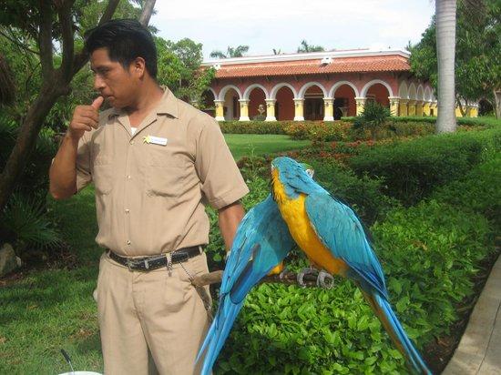 IBEROSTAR Paraiso Del Mar: Le soigneur de la faune dans les magnfiques jardins.