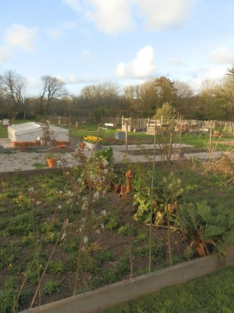 Trevoole Farm: Well stocked Vegetable patch