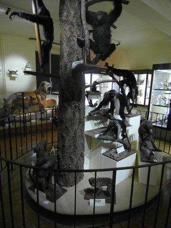 Le Musee d'Histoire Naturelle et d'Ethnographie