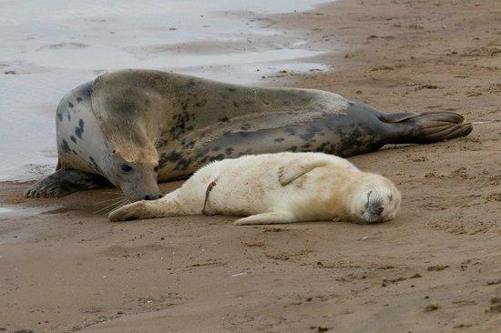 Aristocrat Guest House: Donna Nook Seal Sanctuary