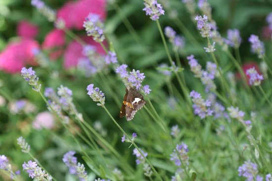 Mountain Song Inn: Butterfly Garden