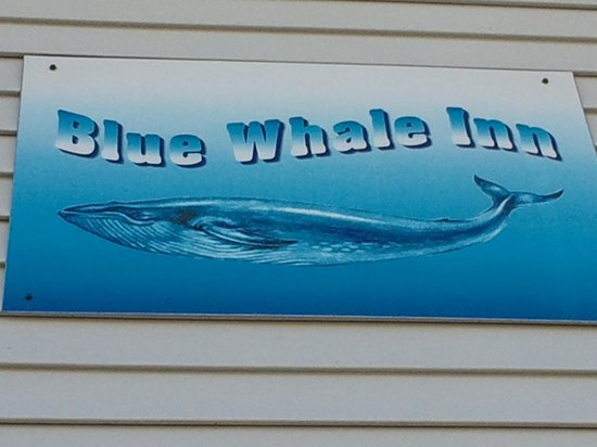 Blue Whale Inn: I like the sign