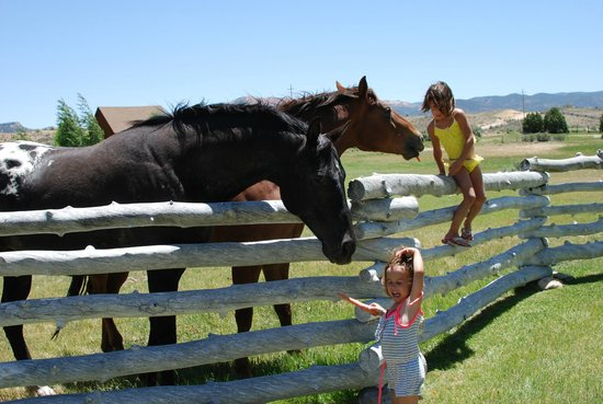 Cottonwood Meadow Lodge: Tending to the horses