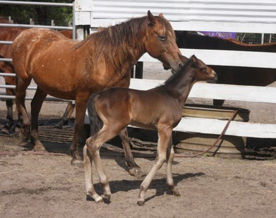 Wild Horse Rescue Center: This is Epic and her babny Kudo. They were rescued in 2012
