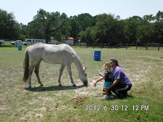 Wild Horse Rescue Center: One of their horses with visiting girl scouts