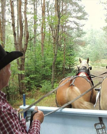 Holiday Acres Resort: Horsedrawn wagon ride