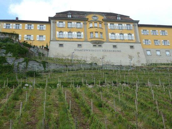 Hotel zum Schiff: the local winery very near the hotel