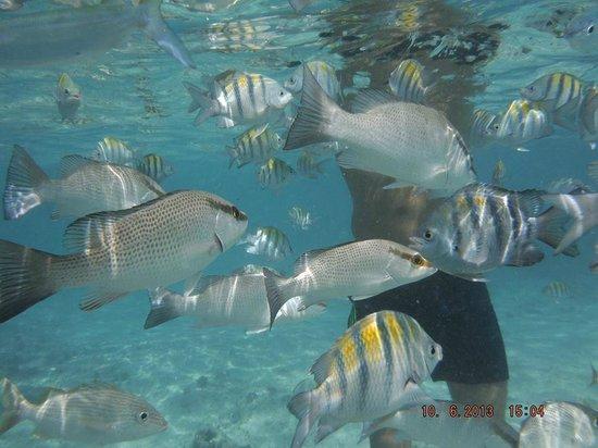 Grand Palladium Riviera Resort & Spa: fish