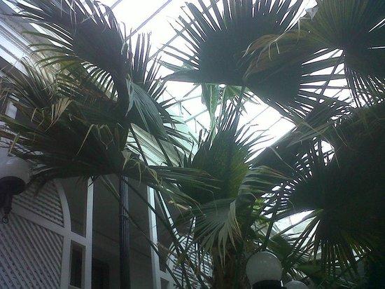 Parana Hotel Plaza Jardin: Jardín de invierno
