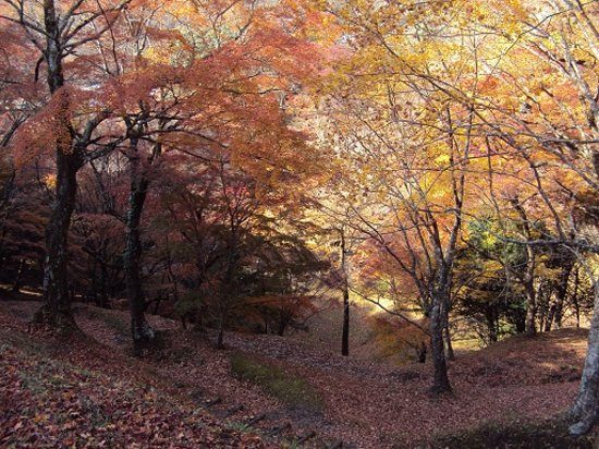 Yujaku Park : 一面の紅葉