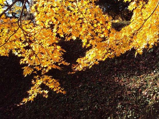 Yujaku Park : 光の当たる黄葉