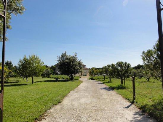 Mas Saint Michel : viale d'entrata