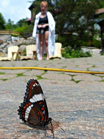 Scandinave Spa Mont-Tremblant : des papillons se gambadent autour de nous
