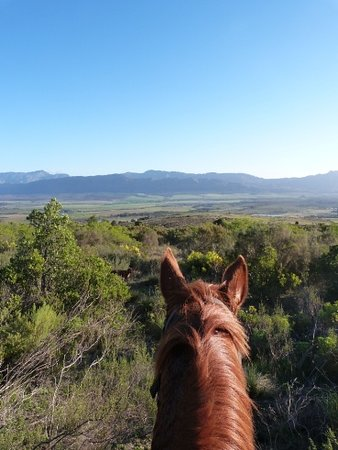 Horse About Trails: Our Horse Trails offer unrivalled views and fabulous horses