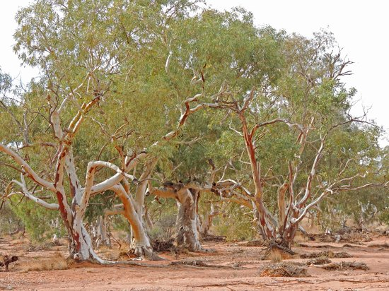 Tri State Safaris Outback Tours: morning tea in the dry creek