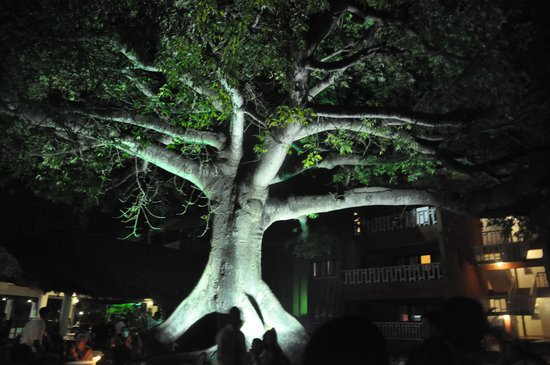 BelleVue Dominican Bay: La ceiba