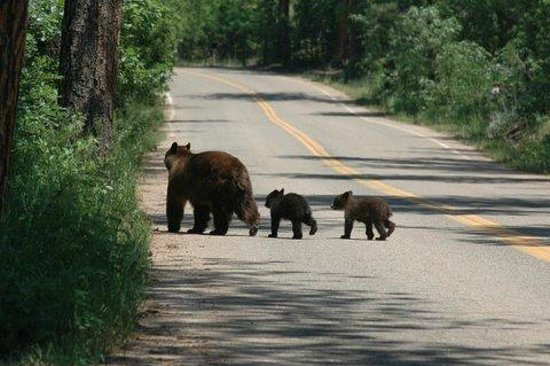 Horseshoe Lodge and Retreat Center: The town of Beulah is unfounded for Colorado and bears roam the road to the park.