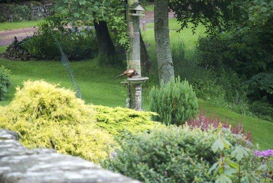 Riverside Mill Bed and Breakfast: birds feeding