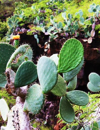 Hike Kauai With Me : Cactus in the canyon
