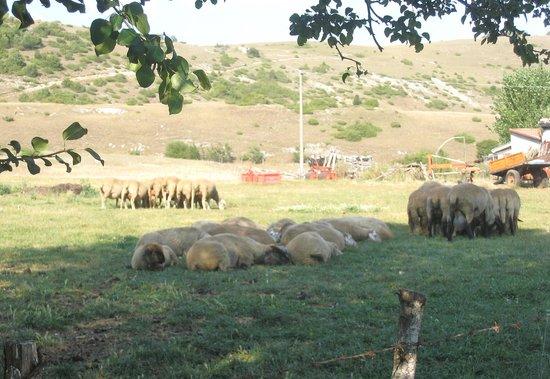 Agriturismo Cascina: In questa valle (la valle di cascina), ho ritrovato la pace che cercavo!
