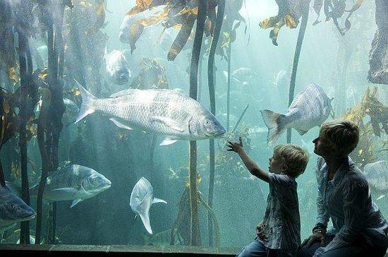Clovelly Lodge Guest Apartments : Waterfront Aquarium