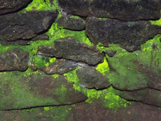 Carn Euny: Bio-luminescent moss in the Fogu