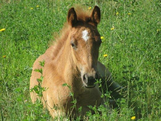 Agriturismo Il Moro : la piccola emy