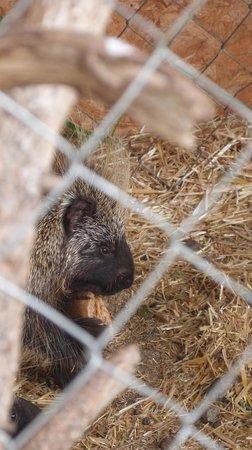 Rocky Mountain Wildlife Park : Loved the porcupine