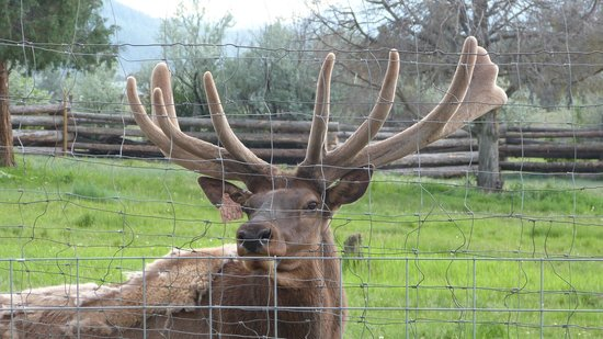 Rocky Mountain Wildlife Park Pagosa Springs Co On