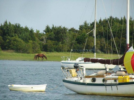 Lookout Cruises: Wild Horses on Parrot Island
