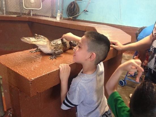 Arkansas Alligator Farm & Petting Zoo: kids loved it!!