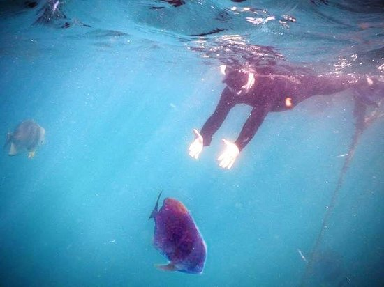 Reef Sprinter: This bid how you catch fish ( seriously these fish let u pat them)