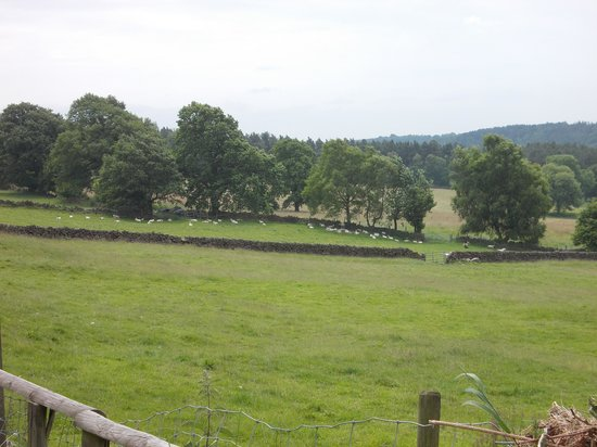 Crowtrees Farm Bed & Breakfast: The view