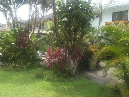 Posada Jaco: Back garden area