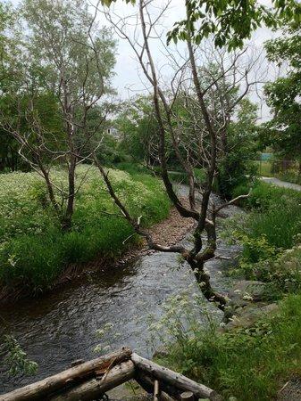 Rennie's River Trail: Along the trail
