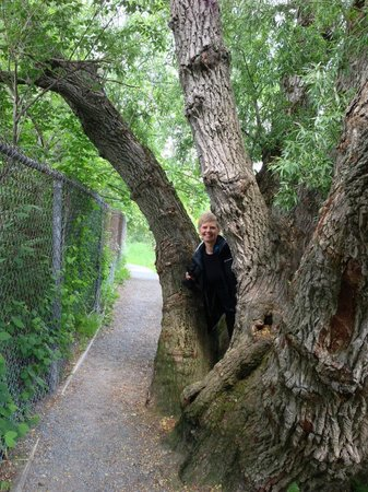 Rennie's River Trail: lovely trees
