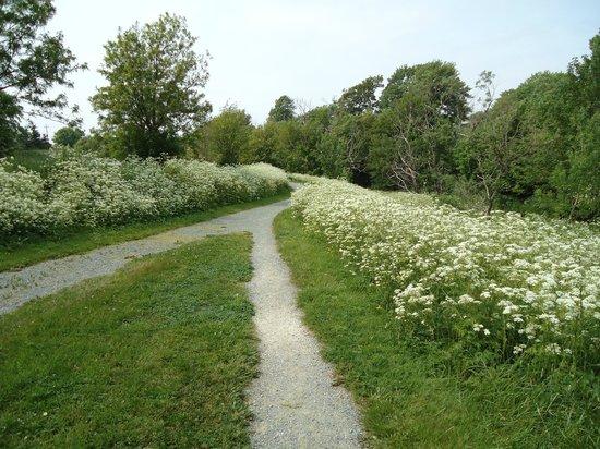 Rennie's River Trail: Queen Ann lace fields