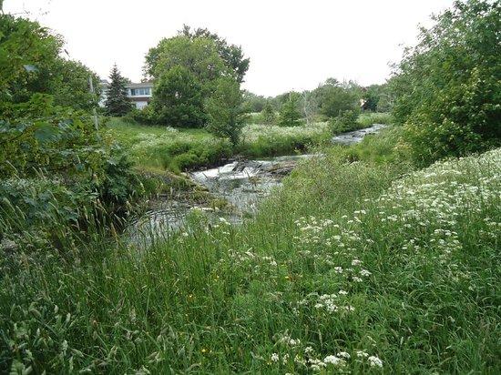 Rennie's River Trail: Greenery