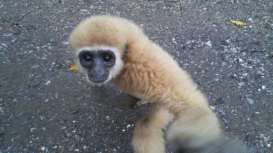 Khaosok Rainforest Resort: Monkeytemple