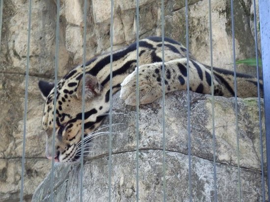Tampa's Lowry Park Zoo: Lowry Park Zoo