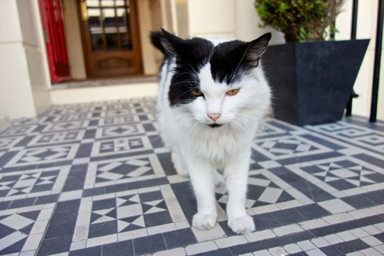 Brighton House: 'Mr Watts' the hotel cat